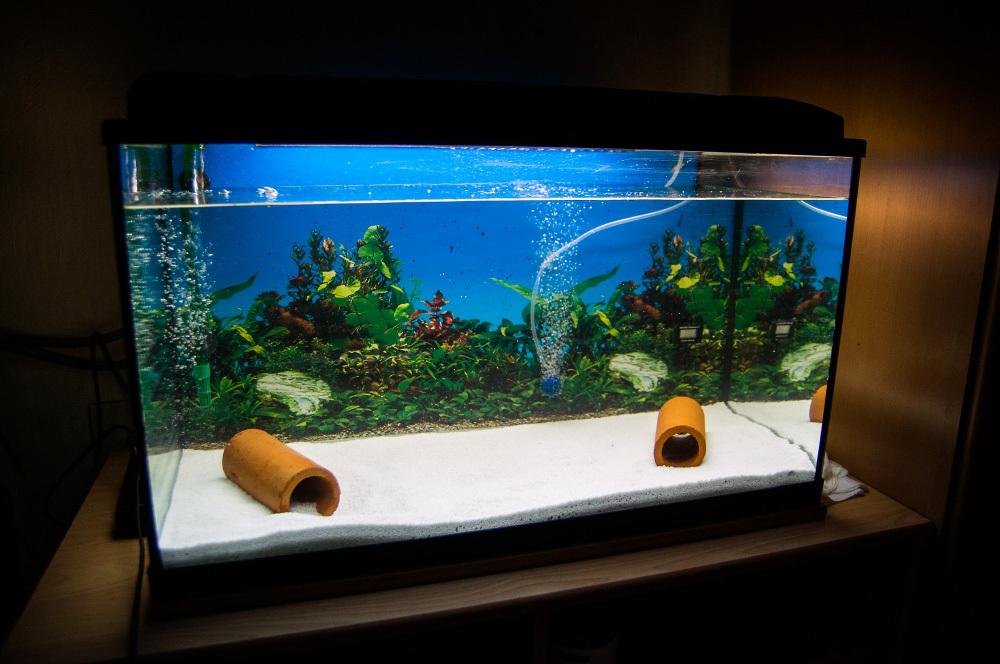 erstes aquarium hilfe gesucht aquarien einrichtung das gro e axolotlforum. Black Bedroom Furniture Sets. Home Design Ideas