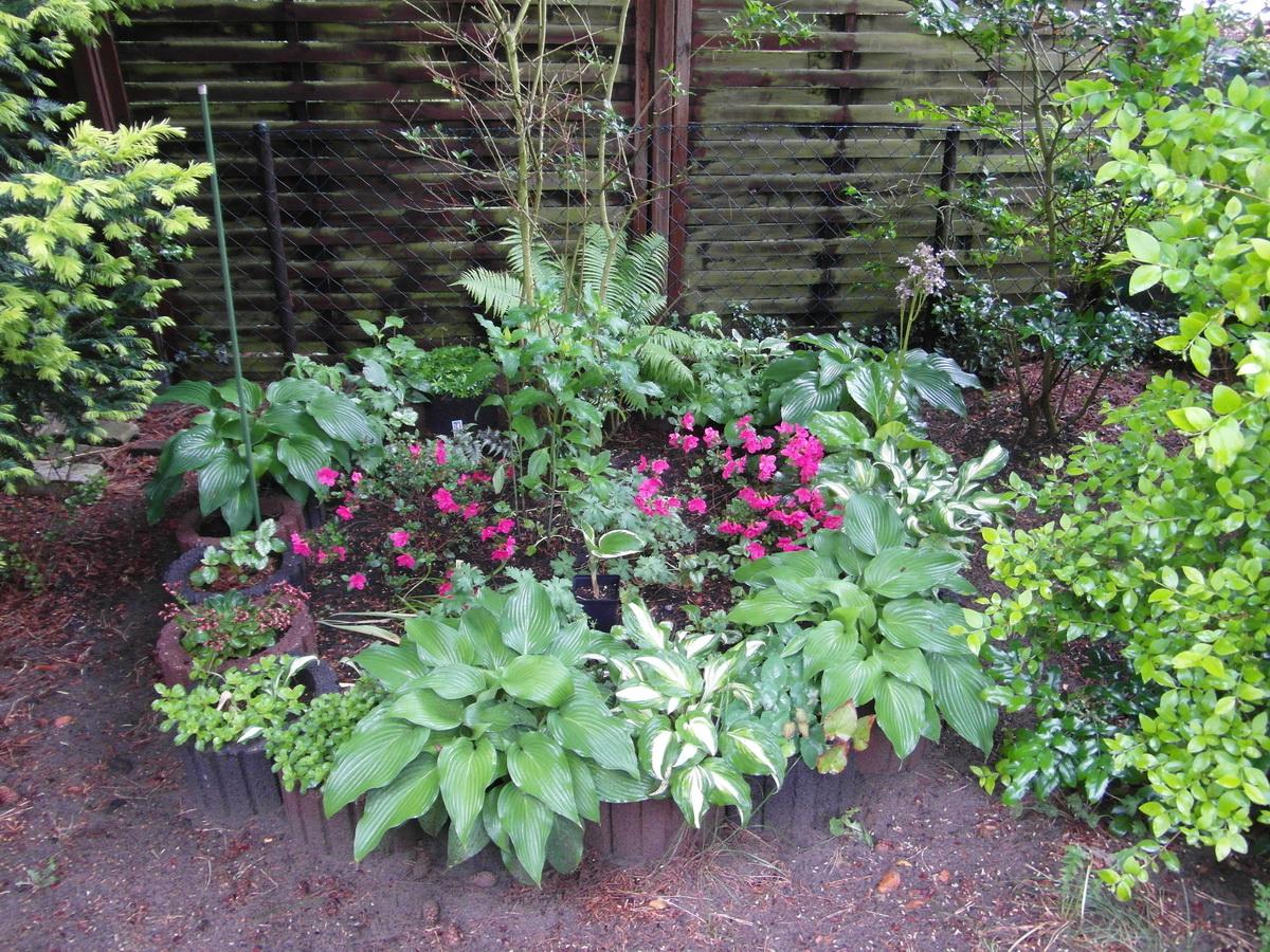 arifs gartenwelt schatten pflanzen gesucht sonstige schattenstauden seite 8. Black Bedroom Furniture Sets. Home Design Ideas