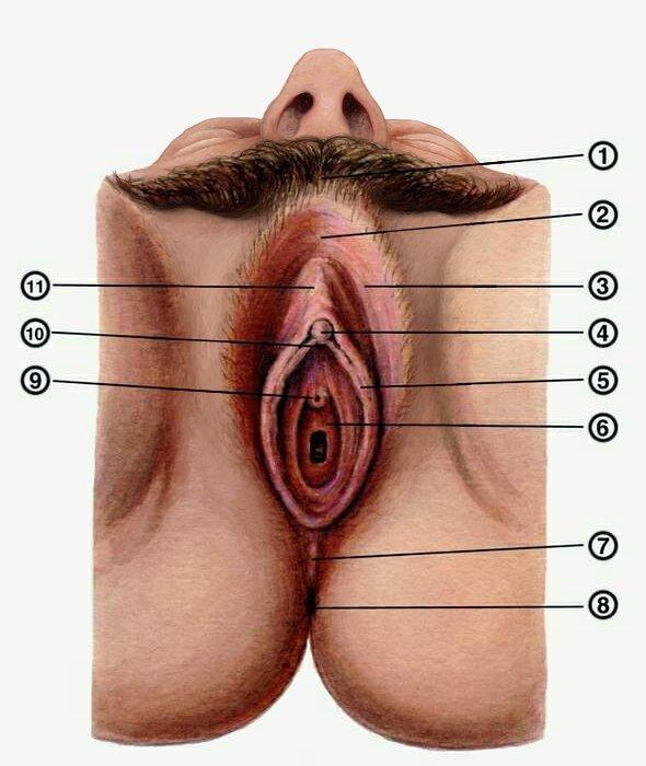 seksapilnaya-sosedka-na-hue-porno-foto