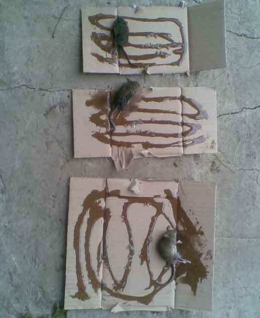 Как сделать капкан от мышей