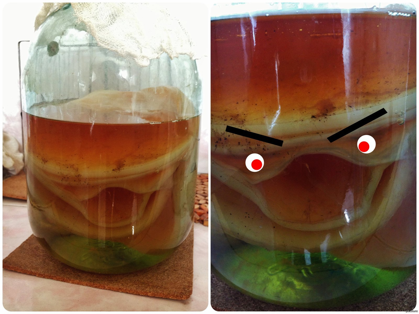 Как сделать чайный гриб в домашних условиях
