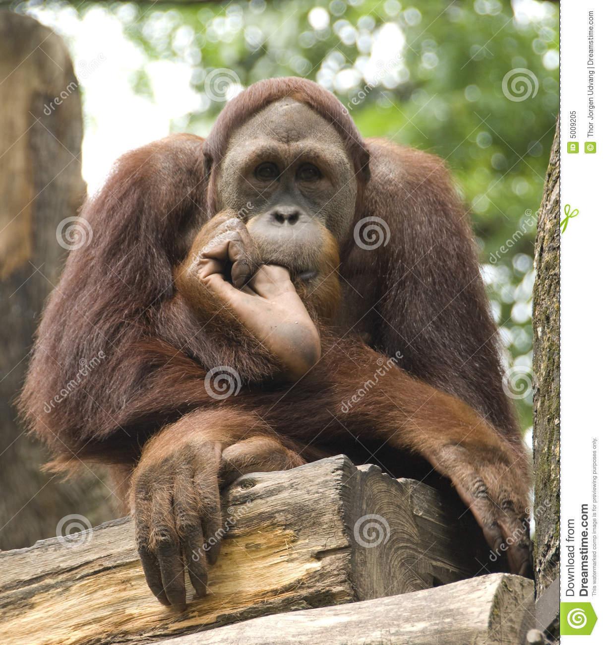 Отсосала обезьяне