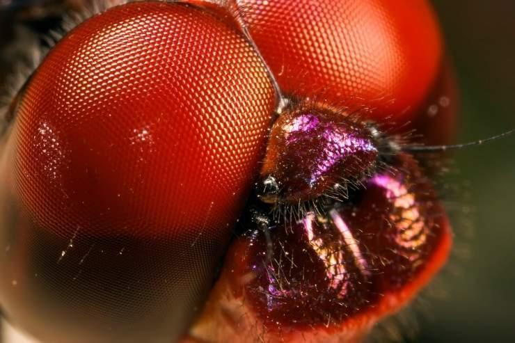 Makrofotografia: owady #2 22
