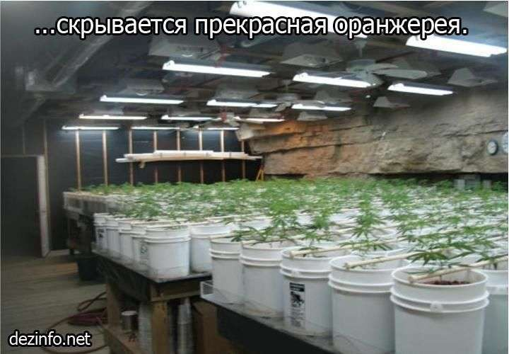 Domowa hodowla marihuany 4