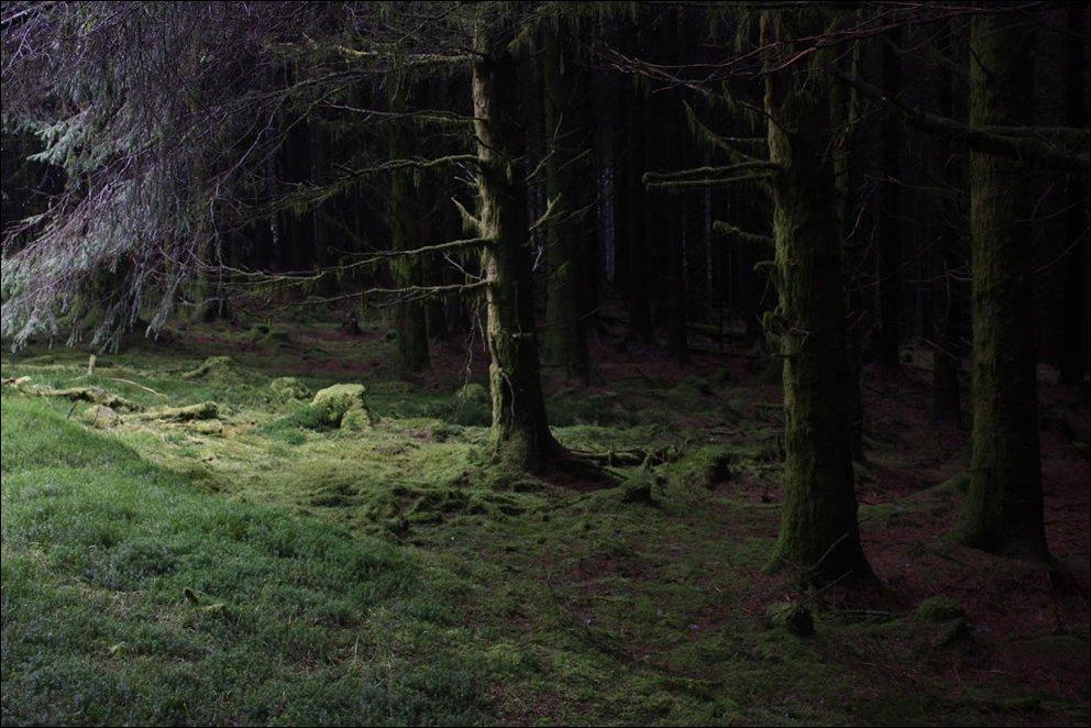 Tajemnicze lasy 3