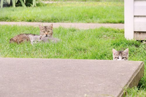 Podstępne koty 27