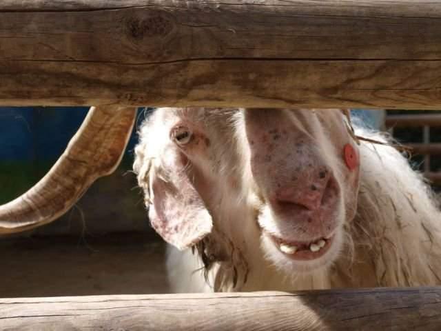 Śmieszne zdjęcia zwierząt #6 24