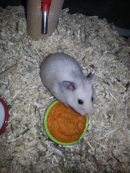 58453 witten 1 miha baby weiblich creme geb ausgezogen happy end hamster. Black Bedroom Furniture Sets. Home Design Ideas
