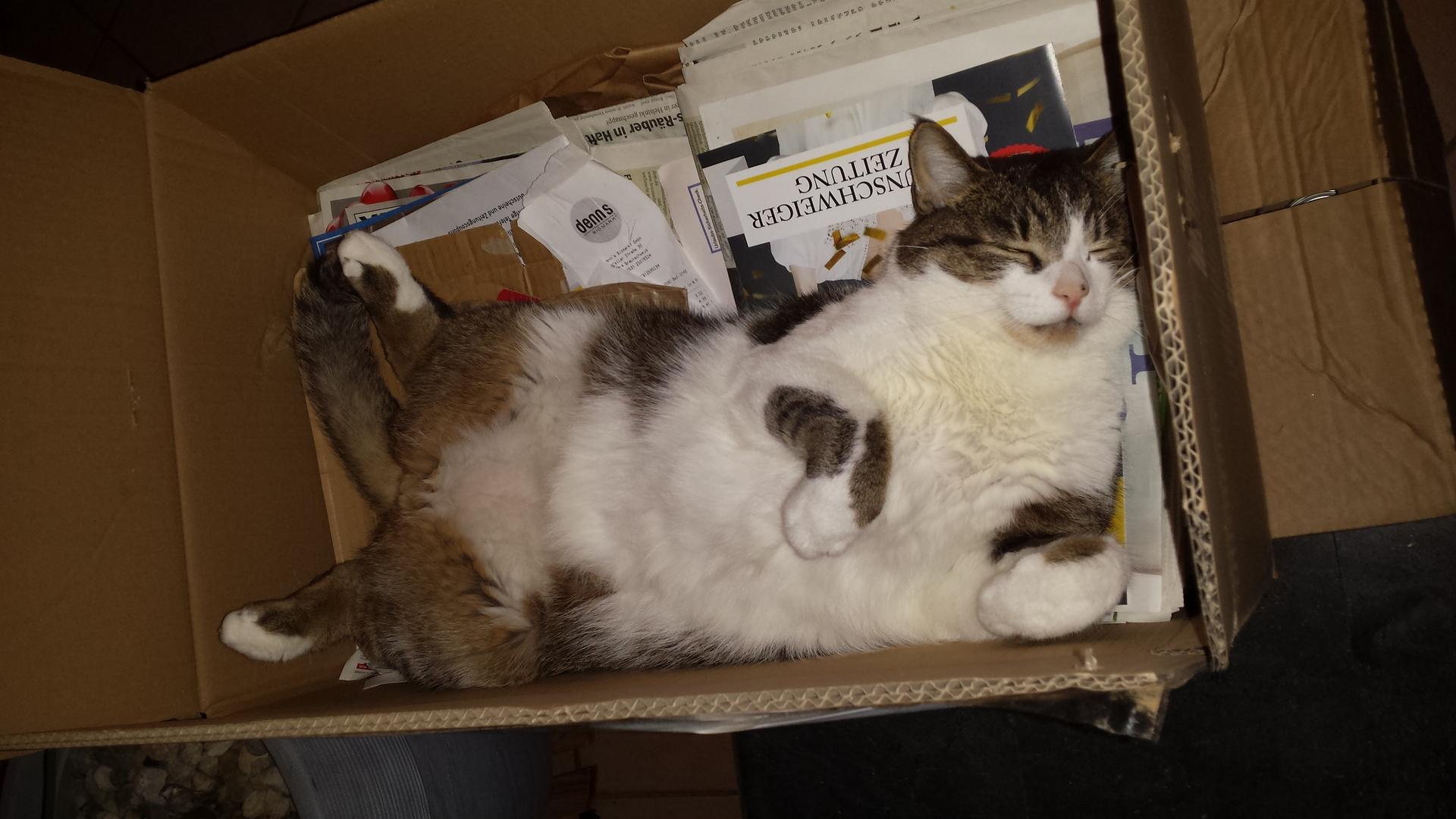 leichenstarre bei katzen