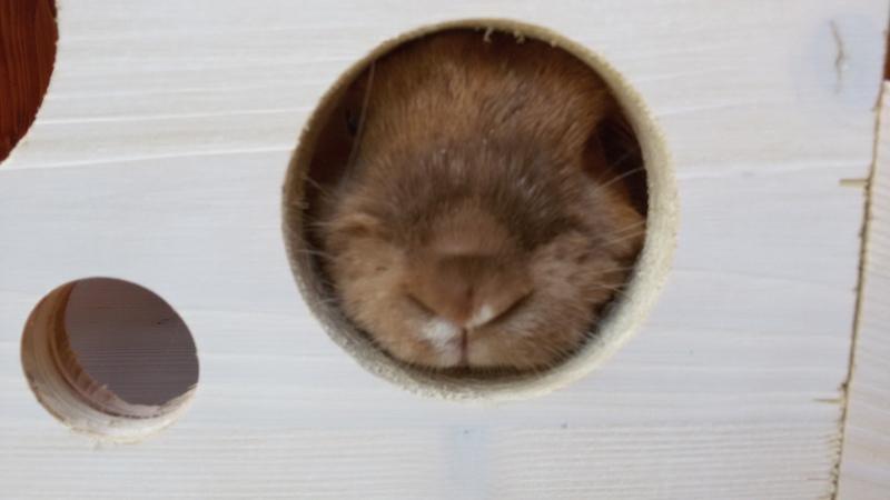 baufortschritt au engehege kaninchen forum by. Black Bedroom Furniture Sets. Home Design Ideas