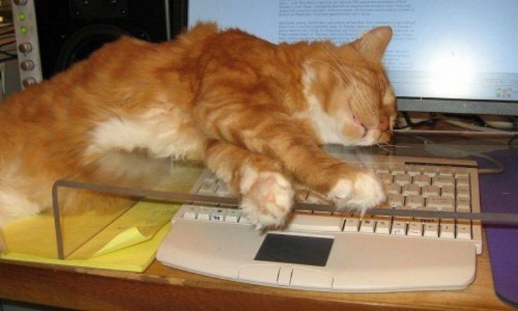 Koty uwielbiają komputery 33