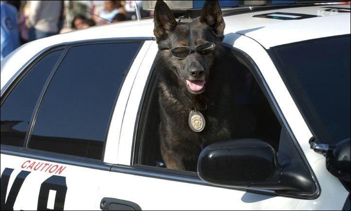 Policja z przymrużeniem oka 13