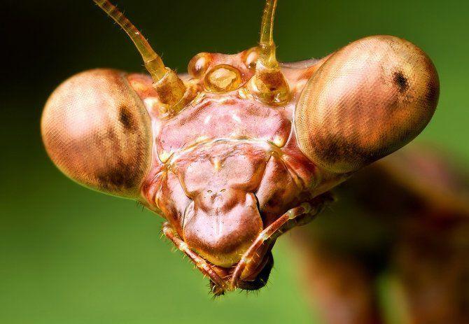 Makrofotografia - owady z bliska 17
