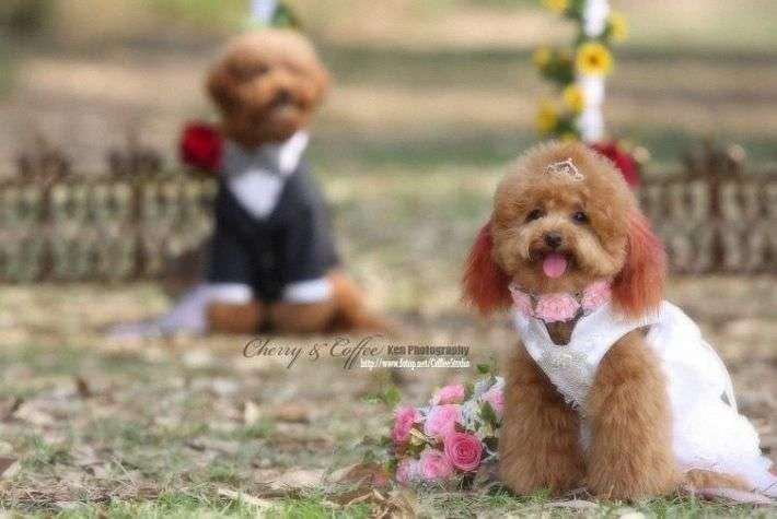 Psi ślub 11