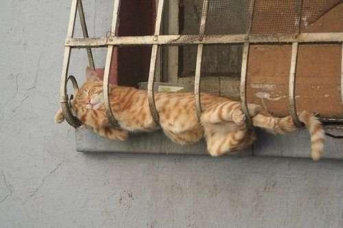 Śmieszne zdjęcia kotów 37