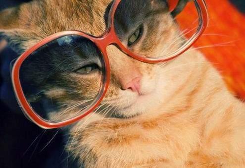 Śmieszne zdjęcia kotów #2 6