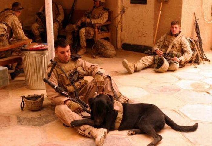 Psy wojskowe 21