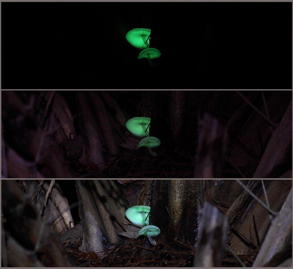 Bioluminescencja 20