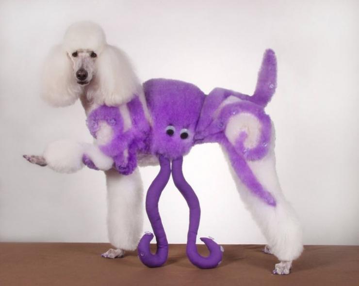 Kreatywni psi fryzjerzy 2
