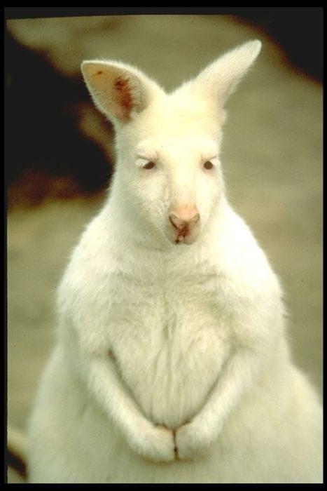 Zwierzęta albinosy #2 7