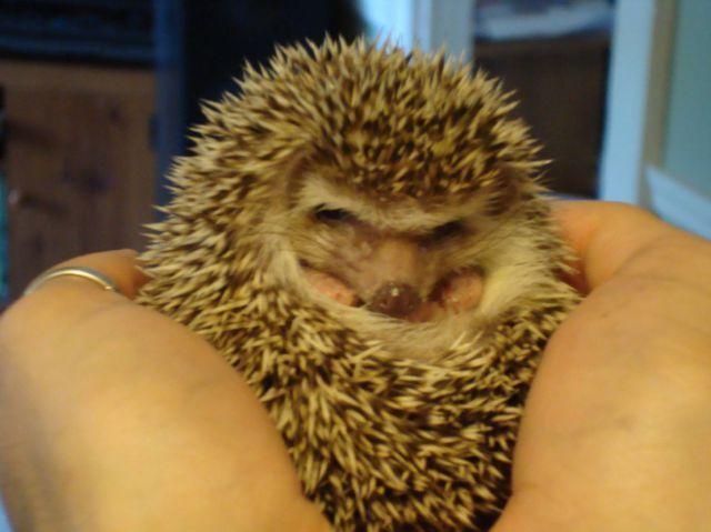 Śmieszne zdjęcia zwierząt #10 23