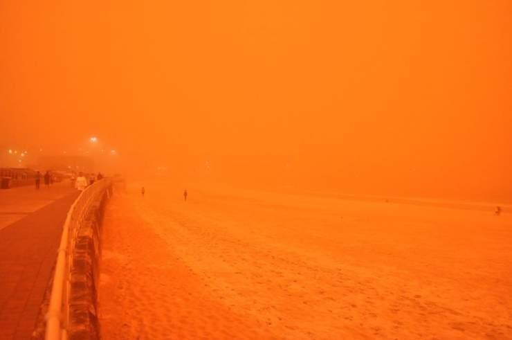 Pomarańczowe Sydney 13