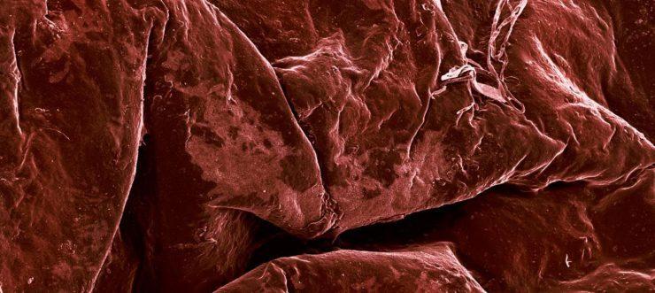 Jedzenie pod mikroskopem 8