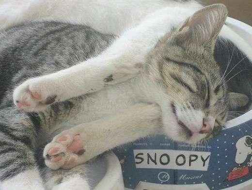 Rozpuszczone, leniwe koty 19