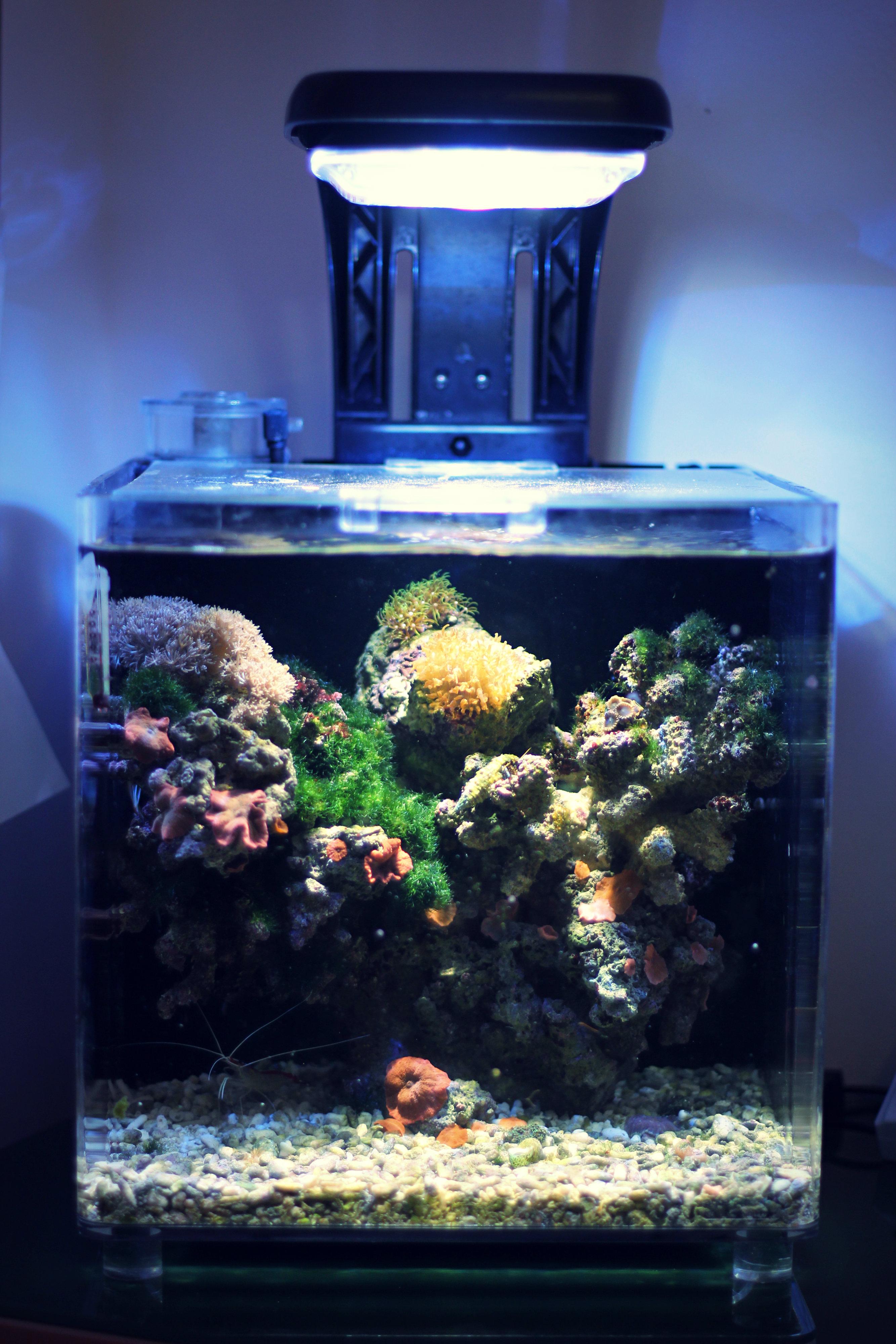 Xeat S Tmc Micro Habitat 30 Unter 100 Liter Dein