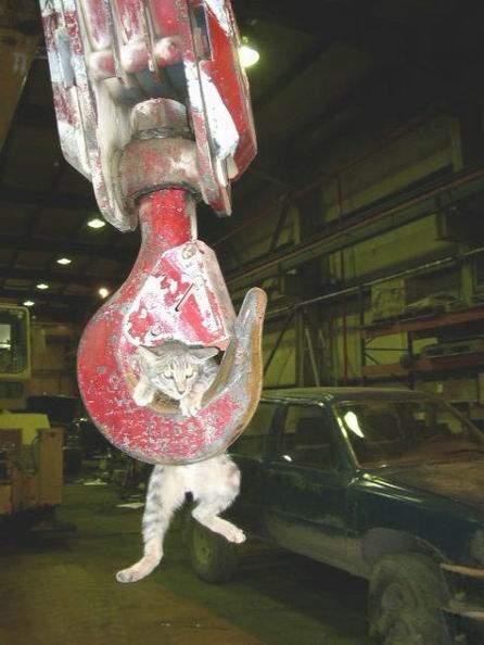 Śmieszne zdjęcia kotów #2 2