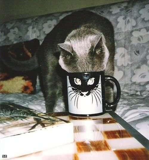 Śmieszne zdjęcia kotów 15