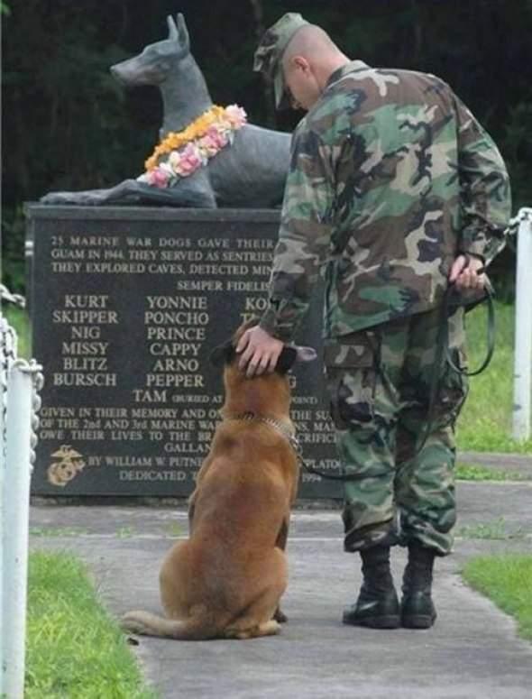 Pies - najlepszy przyjaciel człowieka 9