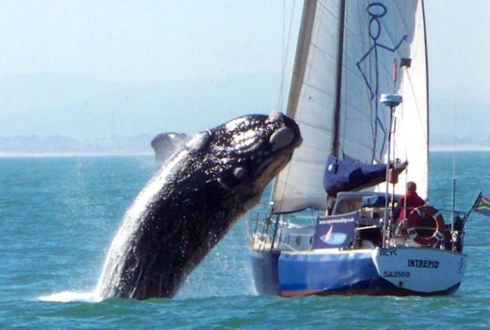 Atak wieloryba 1