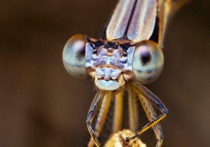 Makrofotografia - owady z bliska 39