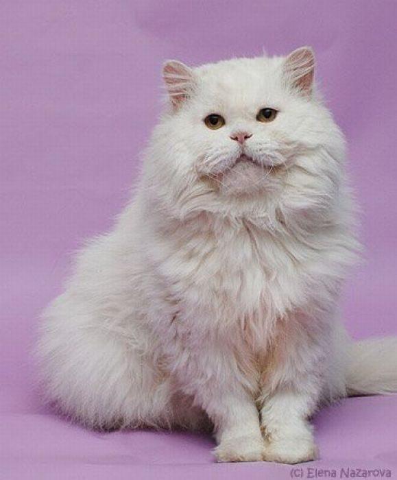 Koty, które dostały szansę na drugie życie 20