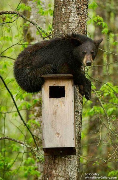 Niedźwiedzie 21