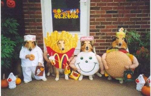 Śmiesznie wyglądające psy 9