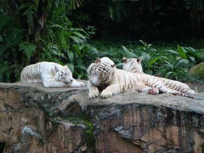 Zwierzęta albinosy 6