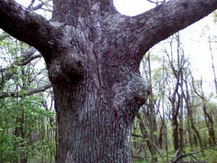 """""""Seksowne"""" drzewa 19"""