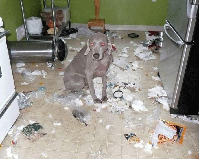 Nieznośne psy 10