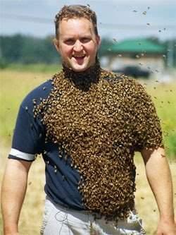 Pszczelarze w bzyczącym towarzystwie 9