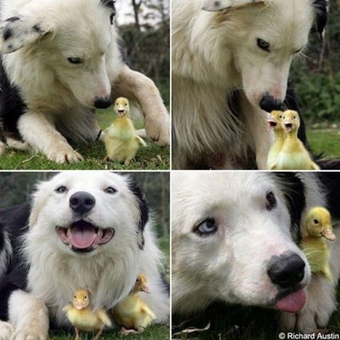 Przyjacielskie zwierzaki 41