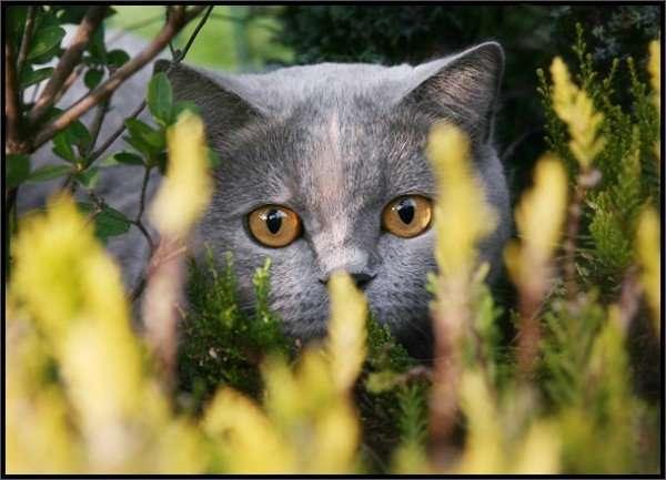Koty 9