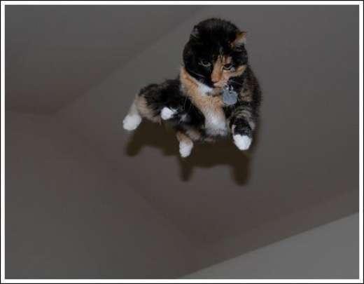 Kocie skoki 14