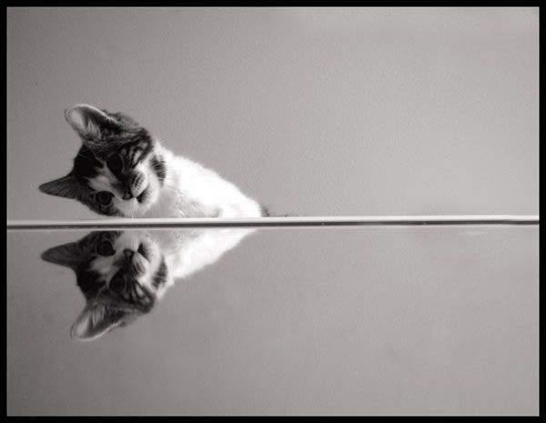 Śmieszne zdjęcia zwierząt #3 14