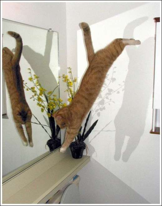 Kocie skoki 10