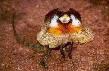 Najdziwniejsze zwierzęta świata 24