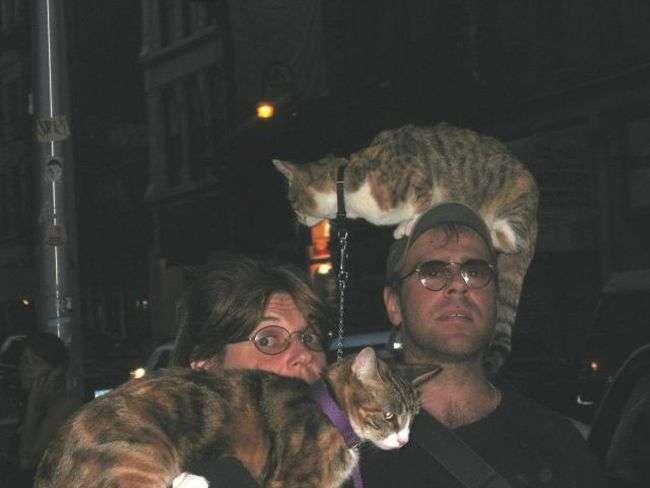 Koty na spacerze 8
