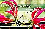 Holunderblütchen Friday-Flowerday
