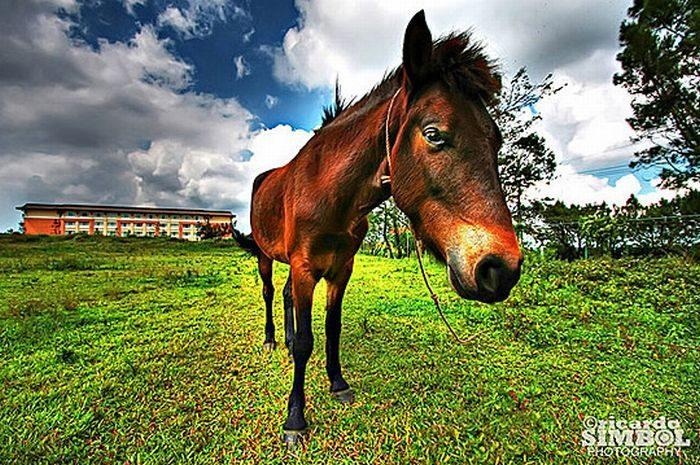 Zdjęcia zwierząt w HDR 29